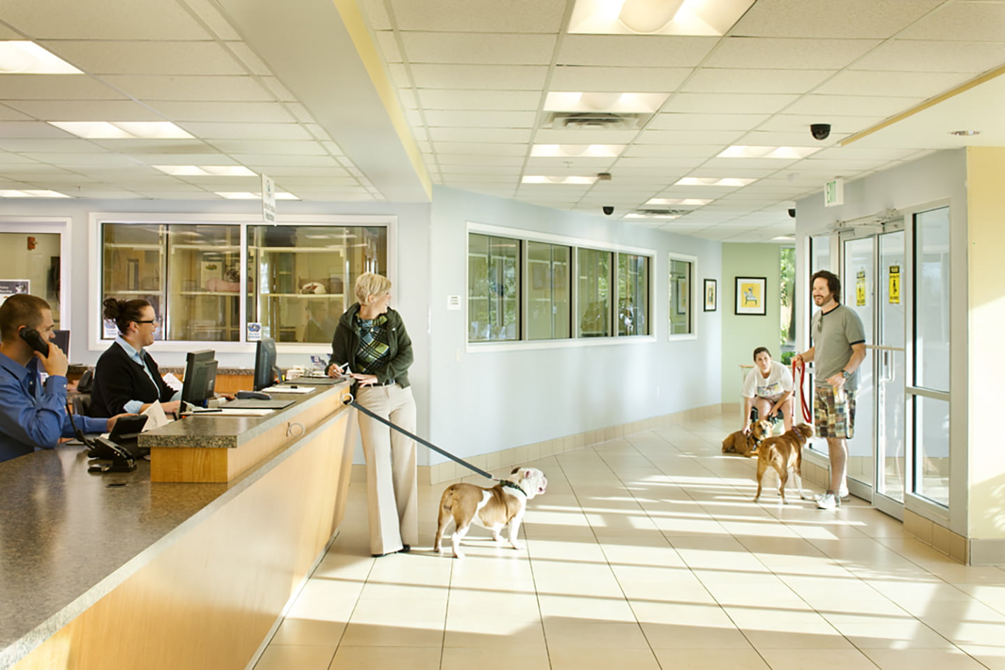 Coral Springs Animal Hospital - Animal Arts