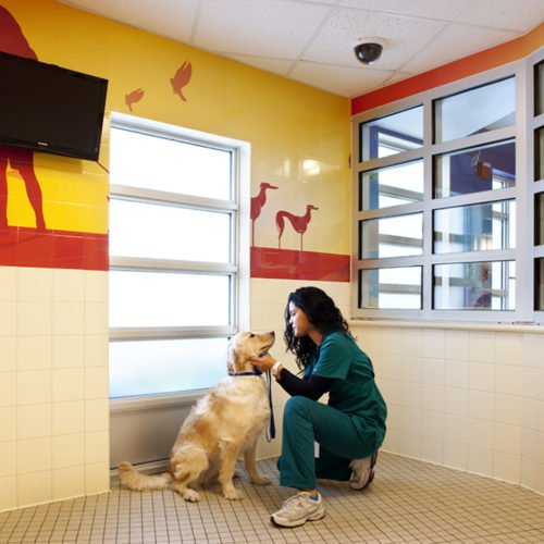 Coral Springs Animal Hospital Animal Arts